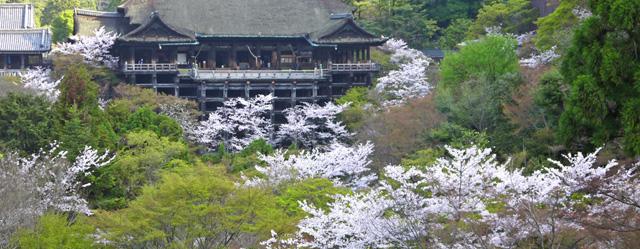 清水寺の春の桜の写真